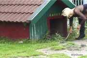 The dog on a leash