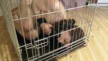 A Slavegirls Home Is A Cage