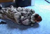 ab-143 Überfall im Pelzgeschäft (2)