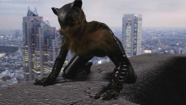Catwomen is back