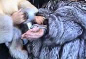 ab-143 Überfall im Pelzgeschäft (1)