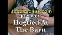 Hogtied At The Barn